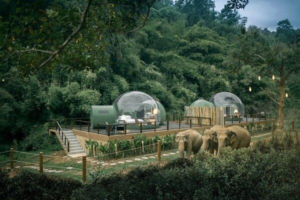 راه اندازی هتل جنگلی حبابی برای همنشینی با فیل ها