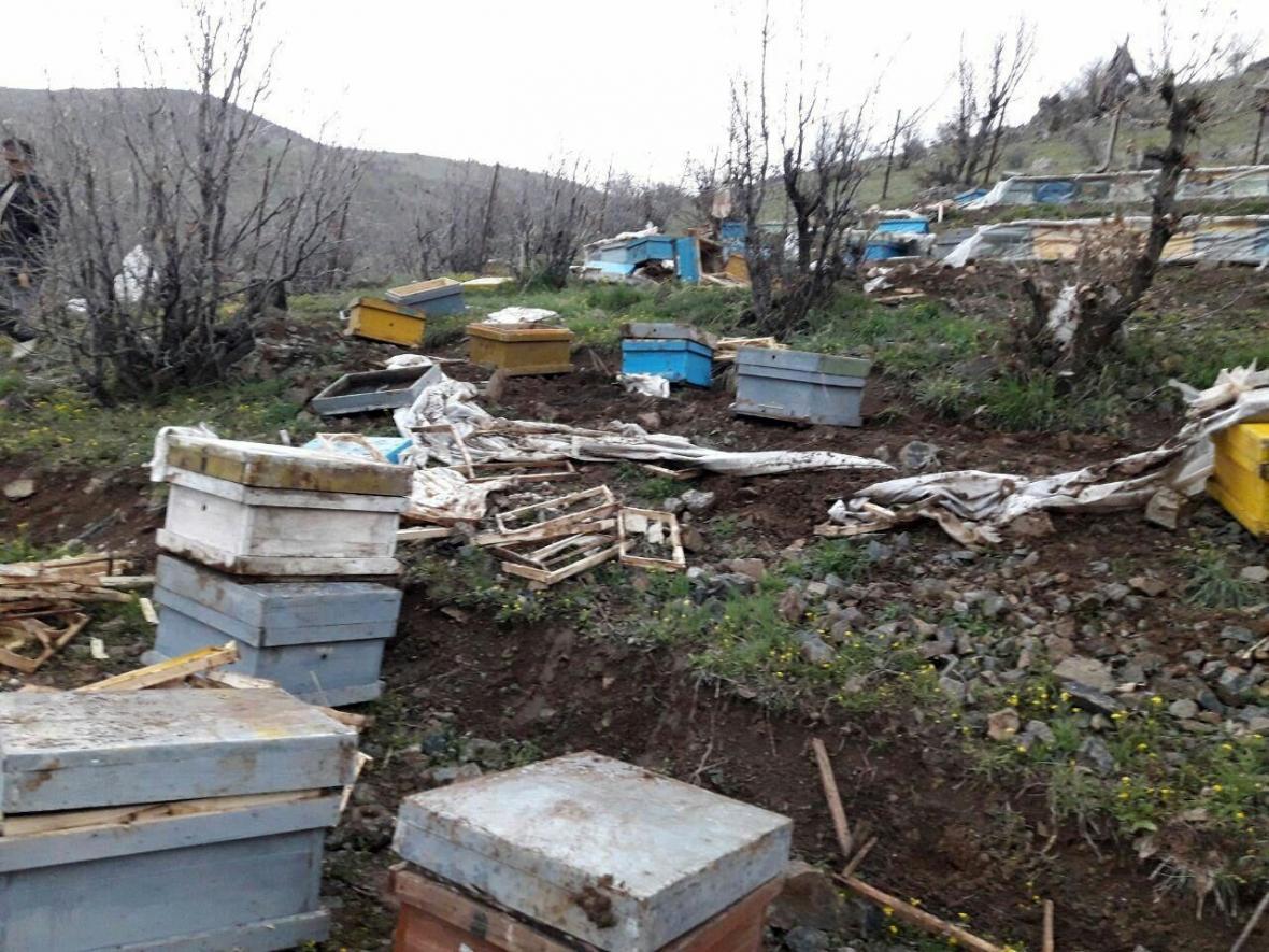 خبرنگاران خرس های گرسنه به یک زنبورستان در مشگین شهر حمله کردند
