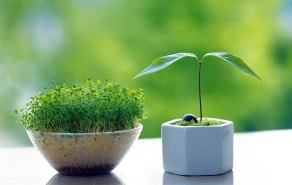 راهنمای کامل کاشت سبزه عید نوروز در خانه با انواع بذرها