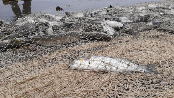 خبرنگاران افزایش 9 درصدی صید انواع ماهیان استخوانی در سواحل گیلان