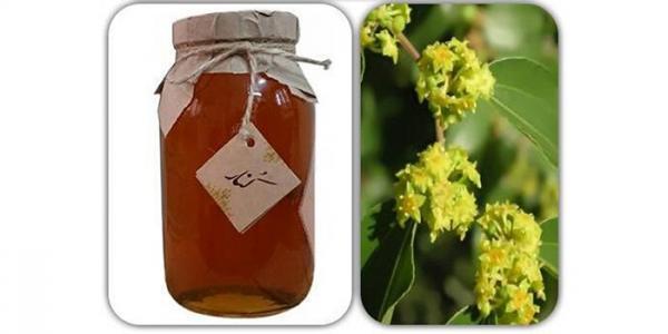 خواص عسل کنار (عسل سدر) و فواید درمانی آن